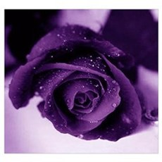 Purple Rose Canvas Art