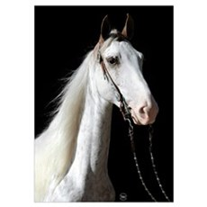 White / Red Roan Horse Poster