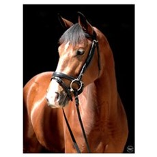 Bay Mare Poster