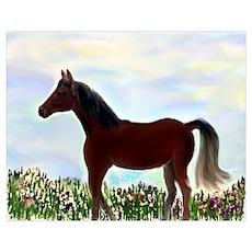 Arabian in Wildflower Meadow Poster