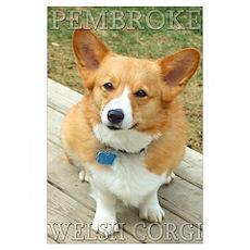 Sitting Pembroke Corgi Poster