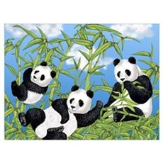 Panda Bears Framed Print