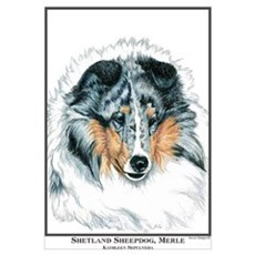 Blue Merle Shetland Sheepdog Canvas Art