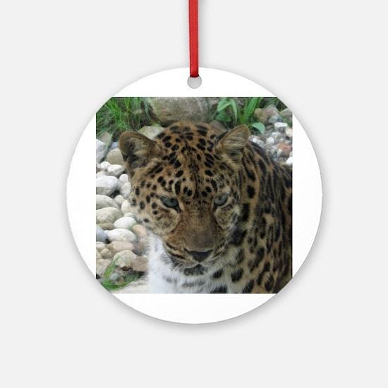 amur leopard 3 Ornament (Round)