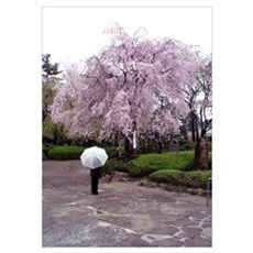 Cherry Blossoms-Umbrella Poster