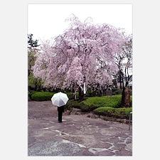 Cherry Blossoms-Umbrella