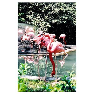 Flamingos Photo Poster