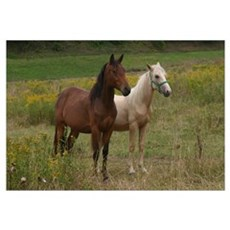 Andalusians in field Canvas Art