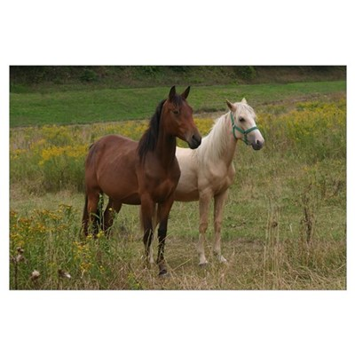Andalusians in field Poster