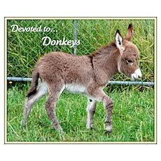 - 'Devoted to Donkeys' Poster