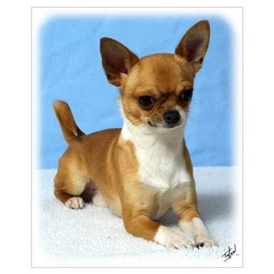 Chihuahua 9W092D-010 Canvas Art