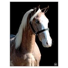 Red Roan Dun Horse Poster