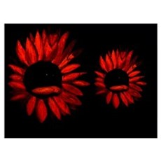 Red Sunflowers Poster