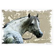 Caspain Horse