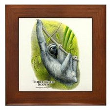 Three-Toed Sloth Framed Tile