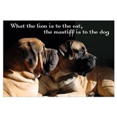 Mastiff pair Canvas Art