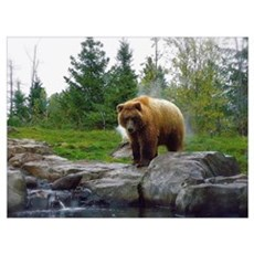 Grizzly Wall Art Poster