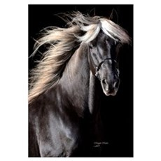 Choco Rocky Mountain Horse Canvas Art
