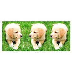 Golden Retriever Pup Poster