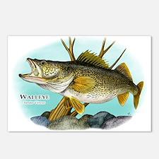 Walleye Postcards (Package of 8)