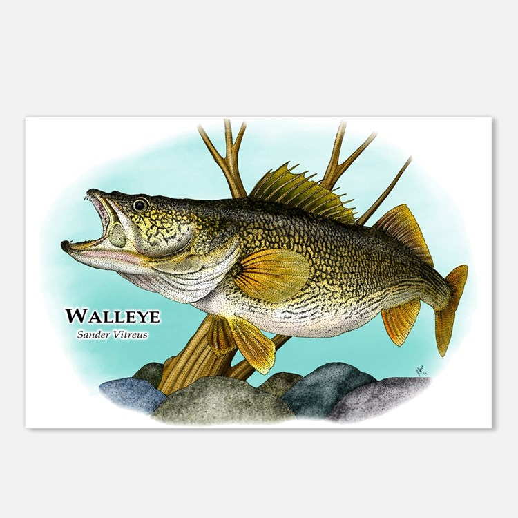 Walleye Postcards (Package of 8)