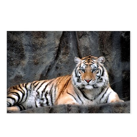 Resting Tiger Postcards (Package of 8)