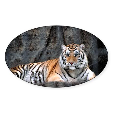 Resting Tiger Oval Sticker