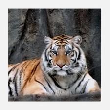 Resting Tiger Tile Coaster