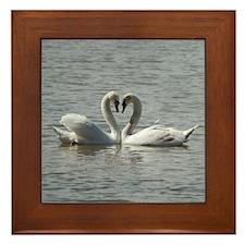 Swans in Love Framed Tile
