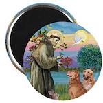 St Francis - 2 Goldens Magnet