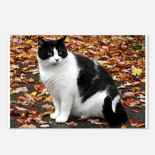 Tuxedo Kitty Postcards (Package of 8)