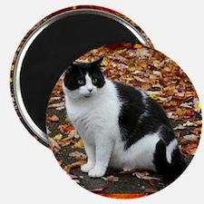 Tuxedo Kitty Magnet