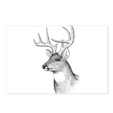 8 Point Buck Postcards (Package of 8)