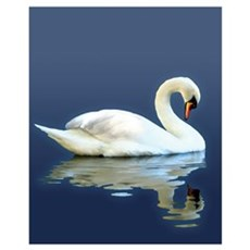 Swan Reflects Poster