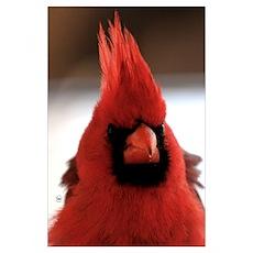 Cardinal Head Poster