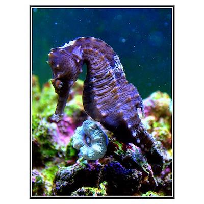 Seahorse III Poster