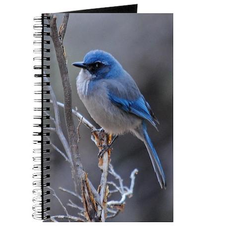 Journal - Scrub Jay