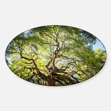 Funny Angel oak tree Sticker (Oval)