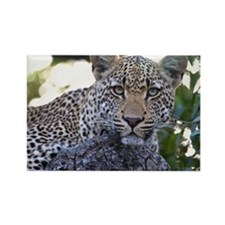 Leopard Portrait Rectangle Magnet
