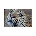 Leopard Portrait Rectangle Magnet (100 pack)