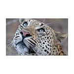 Leopard Portrait 38.5 x 24.5 Wall Peel