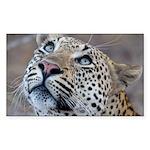 Leopard Portrait Sticker (Rectangle)