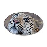 Leopard Portrait 38.5 x 24.5 Oval Wall Peel
