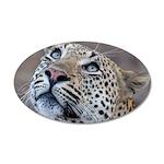 Leopard Portrait 22x14 Oval Wall Peel