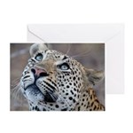 Leopard Portrait Greeting Card