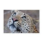 Leopard Portrait Mini Poster Print
