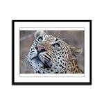 Leopard Portrait Framed Panel Print