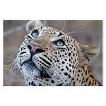 Leopard Portrait Large Poster