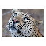 Leopard Portrait Small Poster