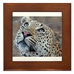Leopard Portrait Framed Tile